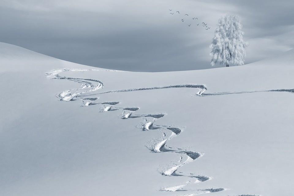 Ski lines in snow